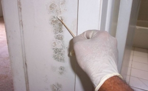 Mould Testing Services Brisbane