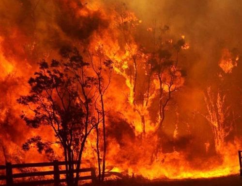 Preparing For Bushfire Season | Fire Damage