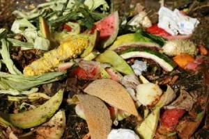 Food Scraps & Squalor Cleaning