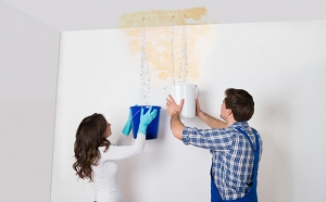 Prompt Mould Removal and Remediation Brisbane
